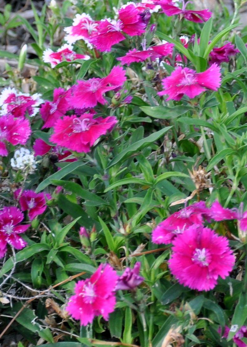 Flowers 3-24