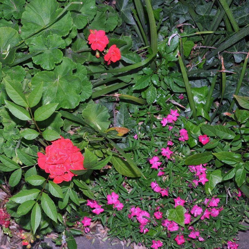 Flowers 3-24 c
