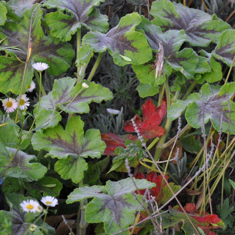 Flowers 3-24 e